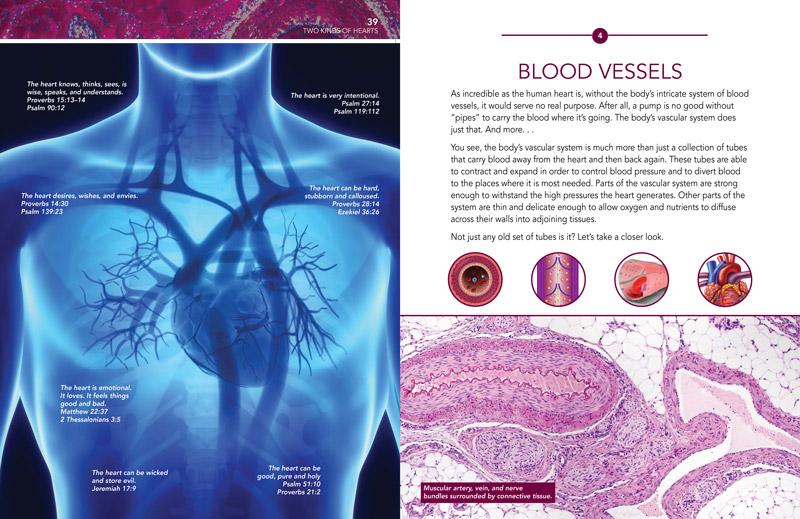 media|img/90-3-264_cardiovascular-system-spread.jpg