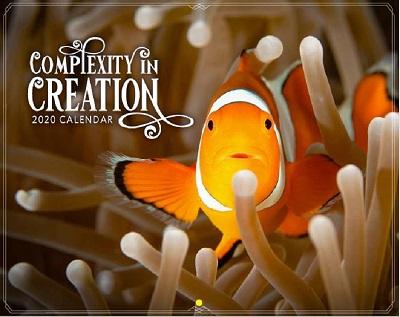 2020 Calendar: Complexity of Creation